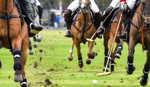 Polo Game in the Sarasota area