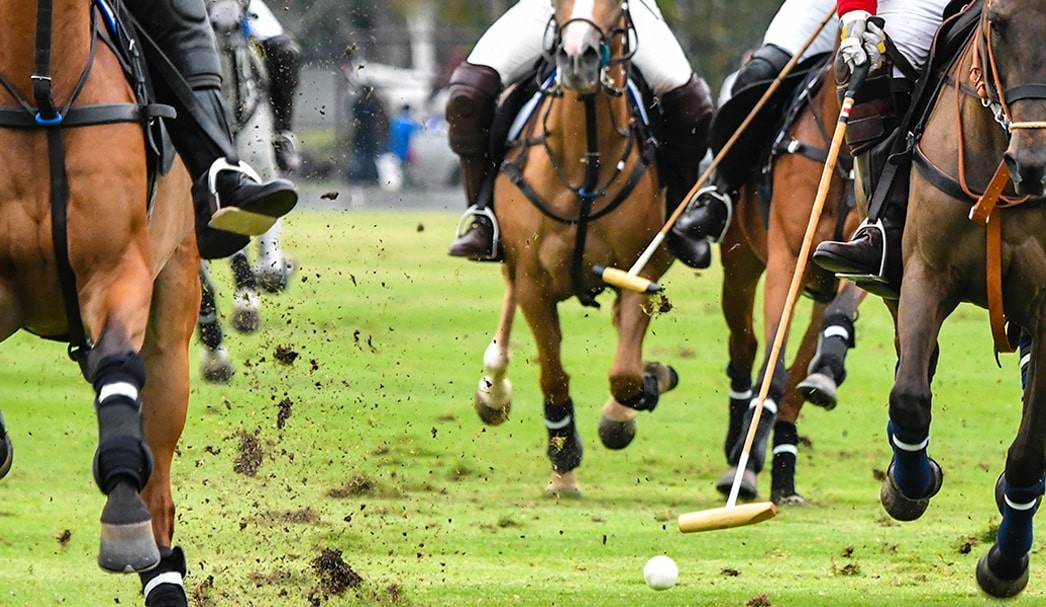 Polo Game in the Sarasota area