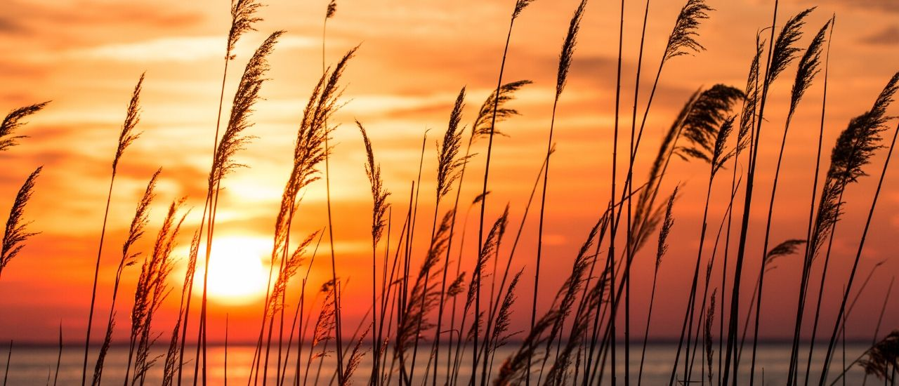 Sunrise Longboat Key Sarasota